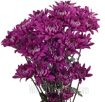 Cushion pom tinted purple flowers at wholesale cushion pom tinted purple flowers mightylinksfo