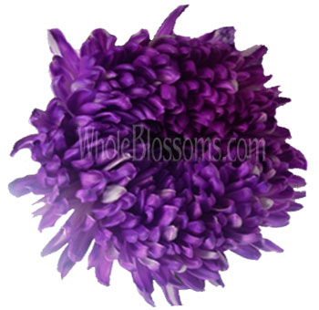 Football Mum Tinted Purple Flower