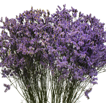 Limonium Tinted Purple Flower