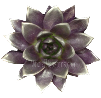 Purple / Silver Painted Succulent Flower