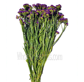 Purple Statice Filler Flower