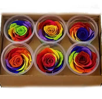 Preserved Rainbow Roses Organic Gift Box