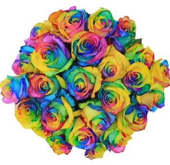 Rainbow Roses Collection