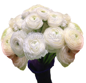 Ranunculus White Flowers