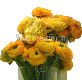Yellow Ranunculus Flower