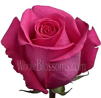 Ravel dark pink wholesale roses ravel dark pink roses mightylinksfo