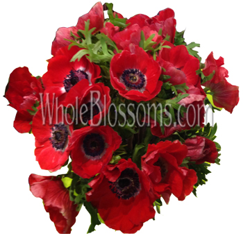 Red Anemone Flower - Next Day Delivery