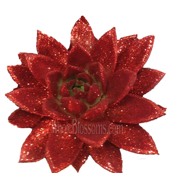 Red Glitter Succulent Flower