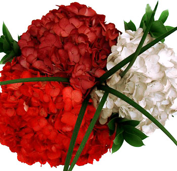 Painted Red White Centerpiece Hydrangeas Collection