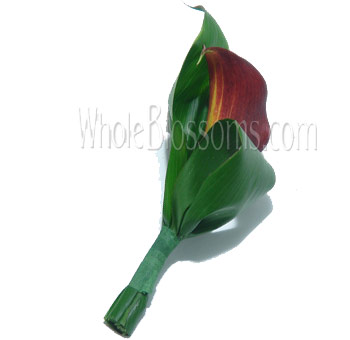 Bicolor Burgundy Red Yellow Mini Calla Boutonniere Flower