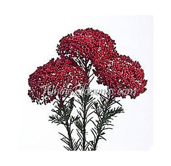 Riceflower wholesale riceflower bulk riceflower red flowers buy from 15999 mightylinksfo