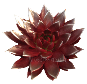 Red / Silver Painted Succulent Flower