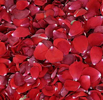 Red Rose Petals Preserved