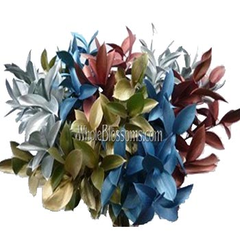 Ruscus Christmas Mix  Flower Filler