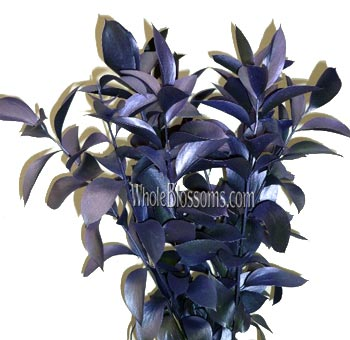 Ruscus Metallic Blue Flower Filler with Purple Cast