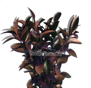 Ruscus Metallic Orange Bronze Flower Filler
