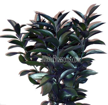 Ruscus Metallic Green Flower Filler