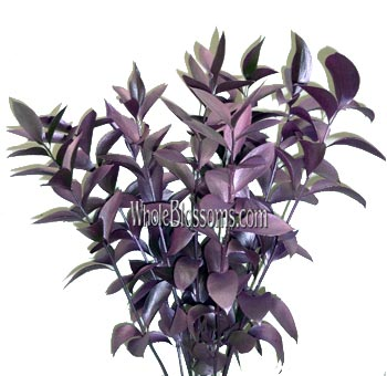 Ruscus Metallic Pink Flower Filler