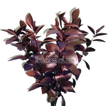 Ruscus Metallic Red Flower Filler