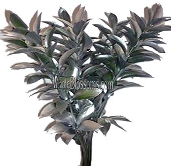 Ruscus Metallic Silver Flower Filler