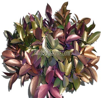 Ruscus Metallic Mix Fall Flower Filler