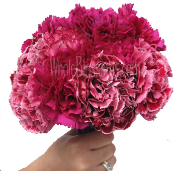 Select Carnations - extra long