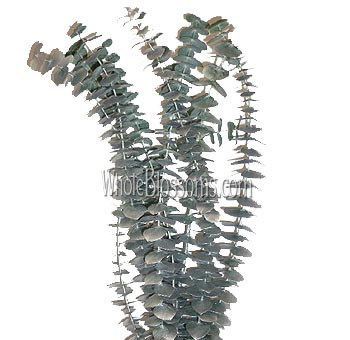 Eucalyptus Metallic Silver Flower Filler