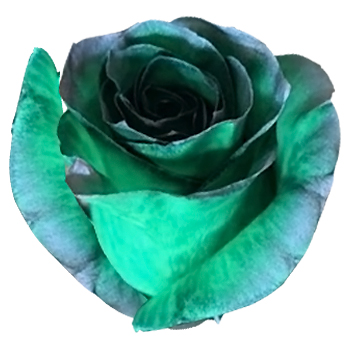 Silver Green Rose