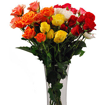 Assorted Spray Roses for Valentine's Day