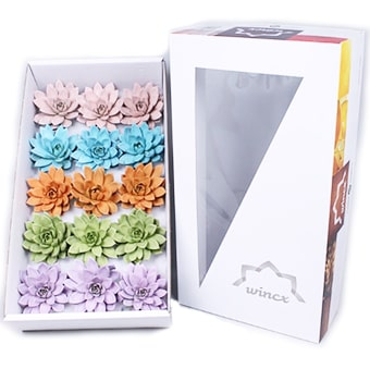 Succulents Pastel Gift Box
