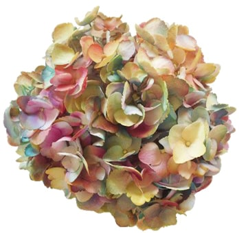 Tie Dye Yellow Turquoise Hot Pink Lime Green Hydrangea