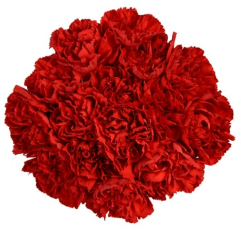 Valentine's Day Bulk Tinted Carnations