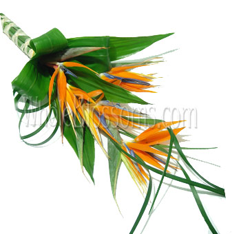 Tropical Hand-Tied Bridal Bouquet