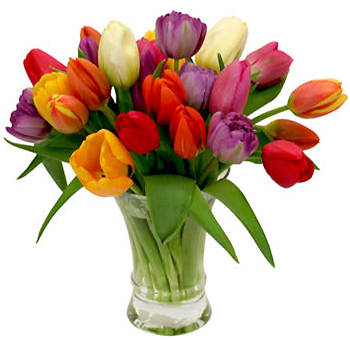 Tulip Assorted Bouquet