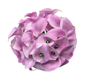 Pink with Purple Cast Calla Lily Bridesmaid Bouquets