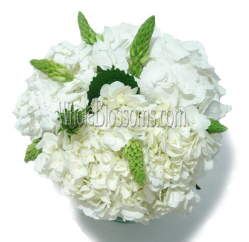 White Hydrangea Wedding Centerpieces Whole Blossoms