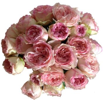 wedding romantica spray garden roses