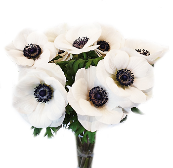 White Anemone Dark Center