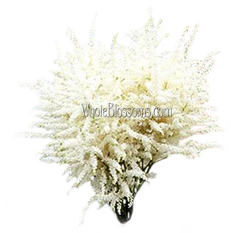 Fresh Cut Astilbe White Flowers