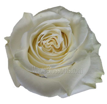 White Chocolate Organic Roses