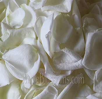 Fragrant White Rose Petals