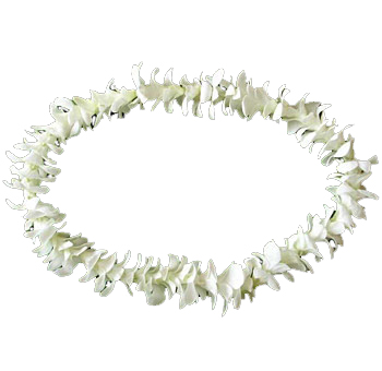 Lei White Flowers