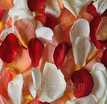 Mix Orange Red White Rose Petals