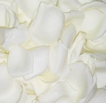 Off White Rose Petals