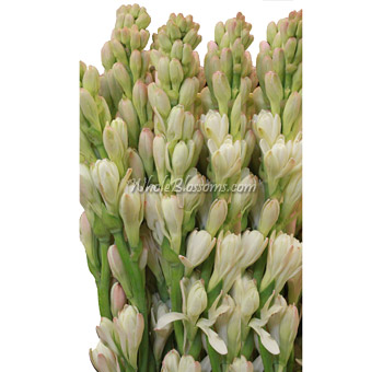 White Tuberose Flower