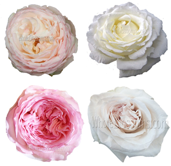 Assorted Growers Choice Garden Roses
