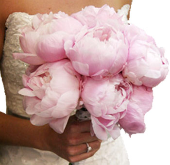 Flower Centerpieces on Peony Flowers Are Some Of The Best Selling Wholesale Flowers For