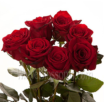 Wholesale Red Rose Ecuadorean Colombian Rose