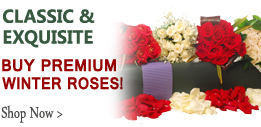 Wedding Roses | Choose Your Colors 125 Stems