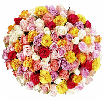 Wholesale Roses - Choose Your Own Colors